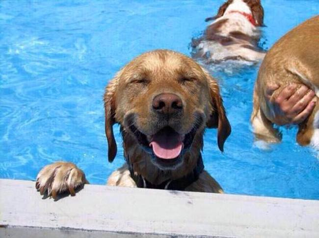 15 החיות שיודעות להנות מהקיץ הכי הרבה!