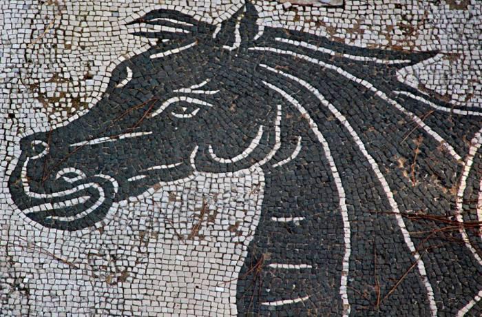Terme di Nettuno, hippocamp, detail of the mosaic of Amphitrite (Heese]