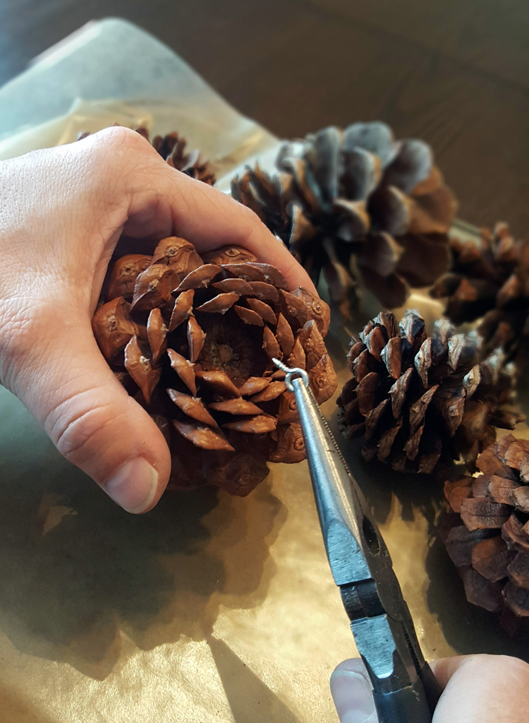 screw into pinecone