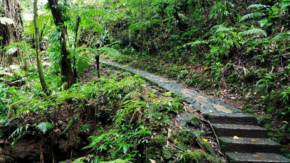 AGlobalLifestyle_Guadaloupe_mountain trail