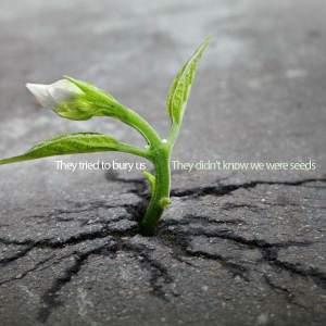 Bury Seeds