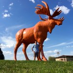 An orange moose