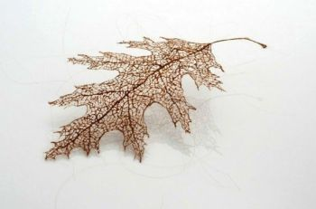 leaves_human_hair_1-11