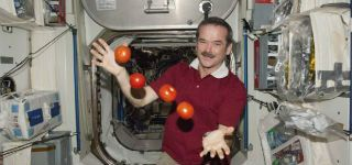 Chris_Hadfield_2