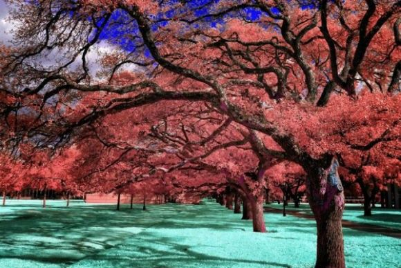 Infrared-Photography-4-600x400