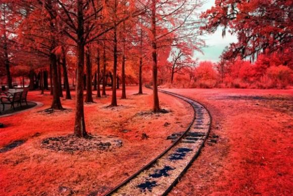 Infrared-Photography-5-600x400