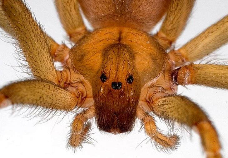 3-_brown_recluse_spider-670