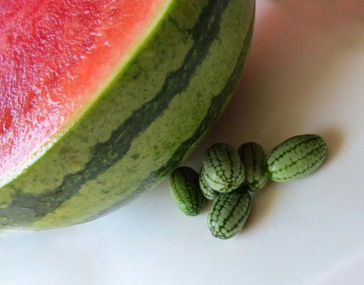 Several small cucamelons next to a large pink watermelon