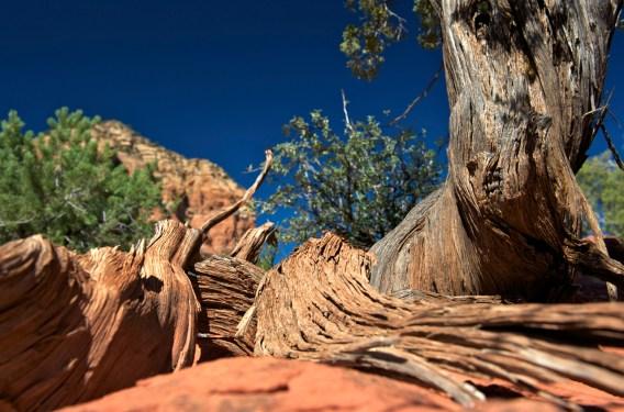 Fascinating vegetation (SB)