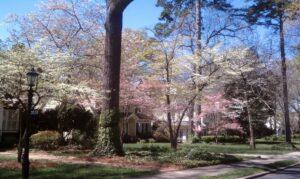 Springtime in Elizabeth Charlotte NC