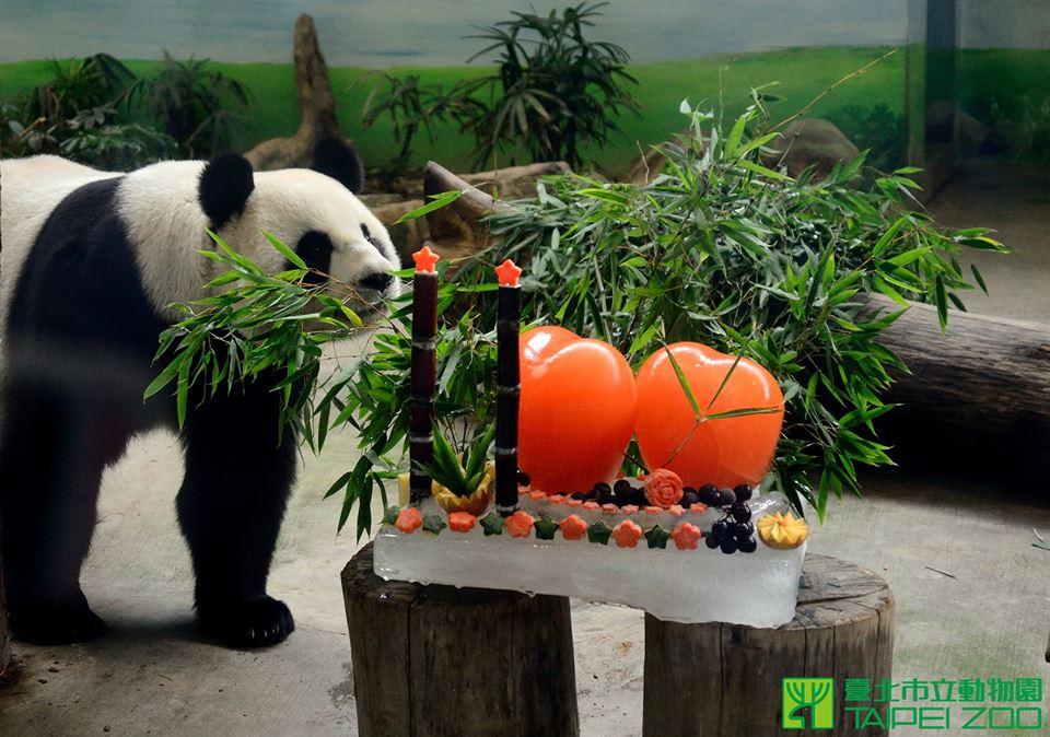 Taipei Zoo pandas celebrate 11 birthday