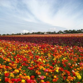 Taichung to Display Massive Kaleidoscope at Annual Flower Festival
