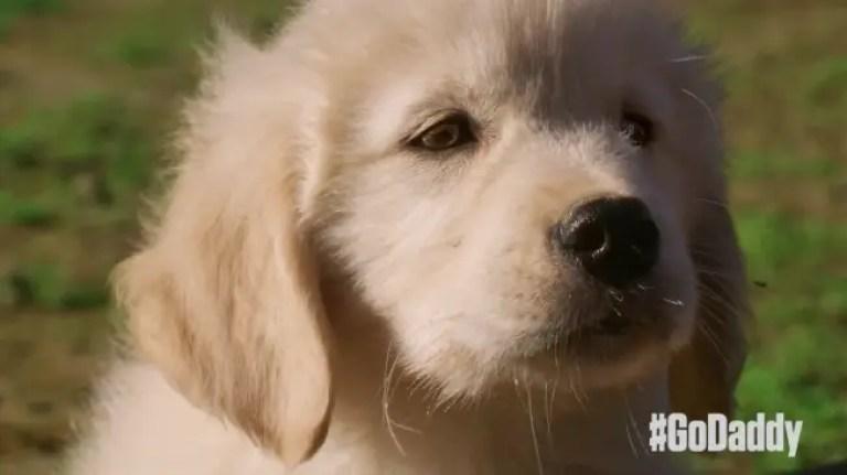 godaddy super bowl puppy ad