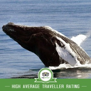 Whale Watching Samana from Punta Cana