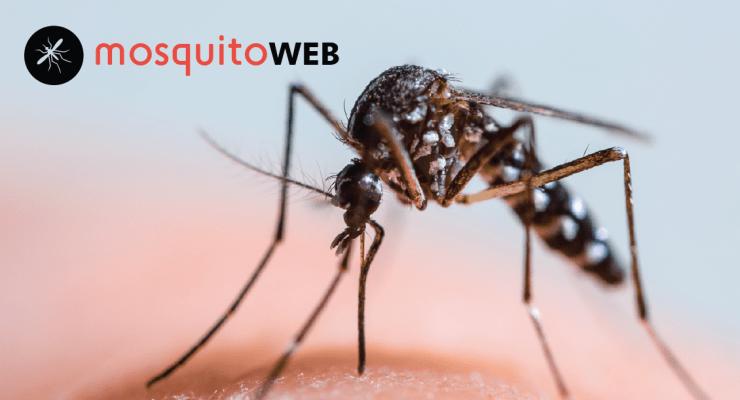 Imagem do projeto Mosquitoweb