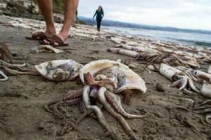 Calamari spiaggiati