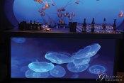 Jellyfish-Bar