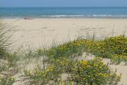 Tagliano le piante sulle dune, albergatori multati