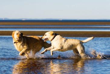 Accesso animali in spiaggia, controlli della Protezione Civile
