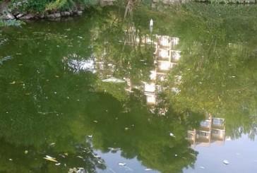 """""""Il laghetto ha l'acqua putrida. Luogo a rischio per i bambini"""""""