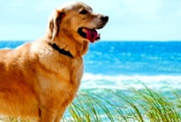 Vasto, ecco le tre le spiagge per l'accesso ai cani