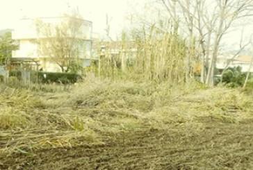 La vegetazione protetta tagliata con la motosega