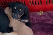 Jovanotti in aiuto di otto cuccioli abbandonati