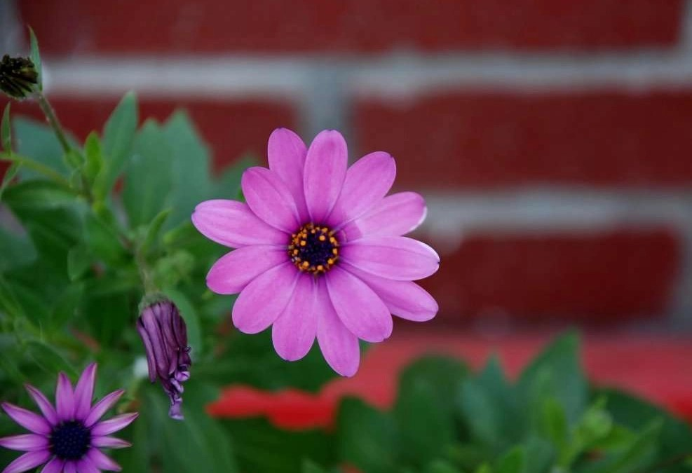 The Color of Brick and Your Flowers