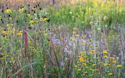 Hardy Prairie Plants, Tough Survivors