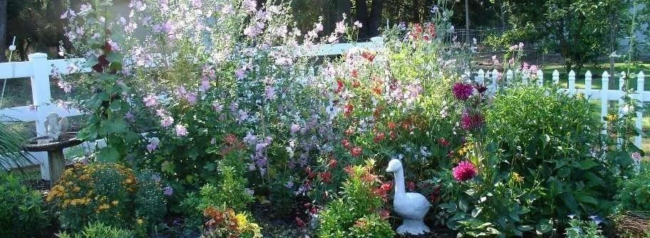 Country Garden Plants for an English Garden Style