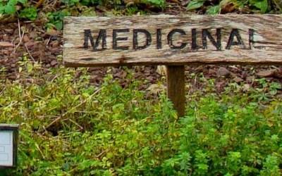 A Garden of Simples, Growing Medicinal Herbs