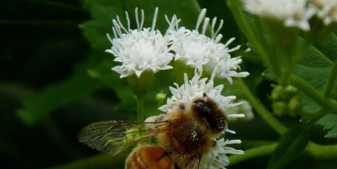 Planting for Bees