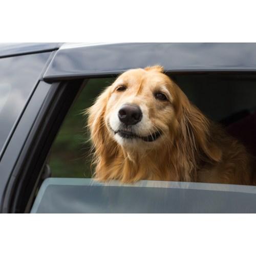 Medium Crop Of Do Dogs Smile