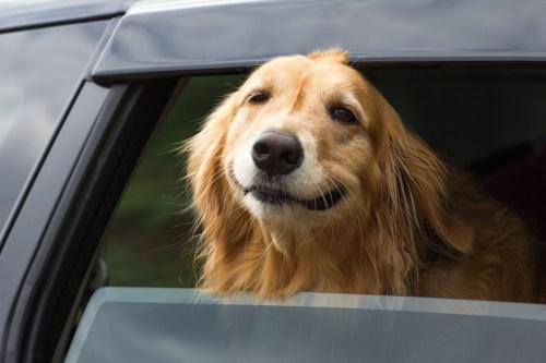 Medium Of Do Dogs Smile