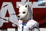 The UCONN Huskie