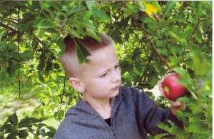 Upick Apples