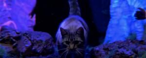 """Un gatito lisérgico en el nuevo video de Mastodon: """"Asleep in the Deep"""""""