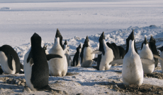 'Penguins' Trailer: Disneynature's Newest Documentary Is All About, You Guessed It, Penguins — Watch