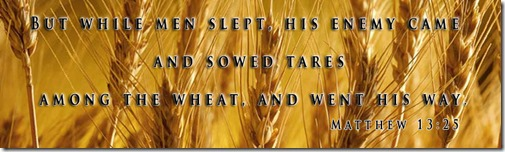 wheat and tares 2