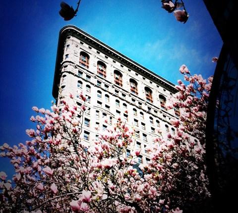 Madison square park inewyork for Comprare casa a new york manhattan