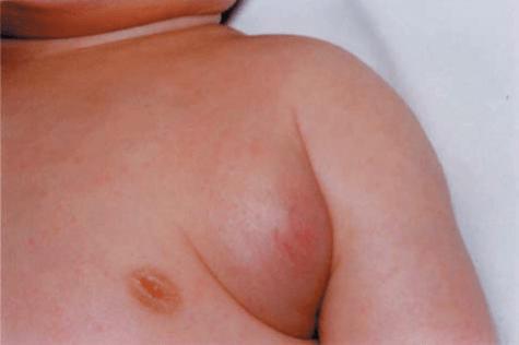 shemale huge anal dildo