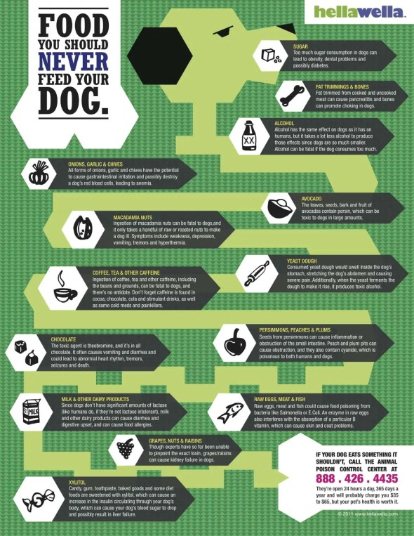 Infographic: Foods You Should Never Feed Your Dog