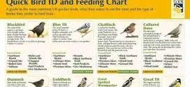 bird-feeding-info