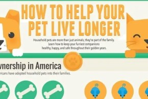 pets-infographic