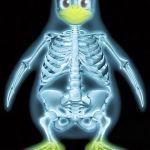 pingouin-linux