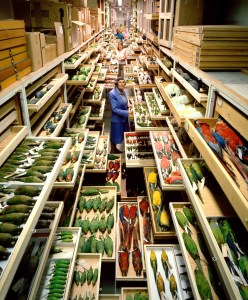 Birds collections from the Department of Vertebrate Zoology are displayed at the Smithsonian Institution's National Museum of Natural History.