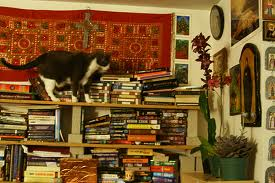 libros_gatos
