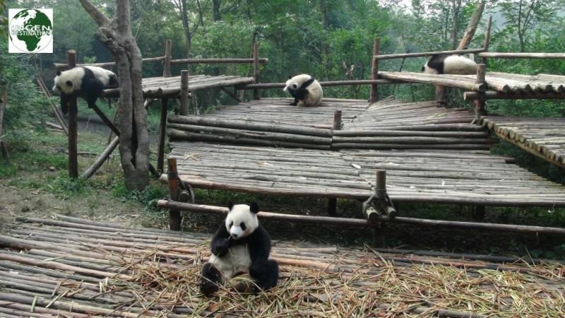 Legeland for de lidt yngre pandaer