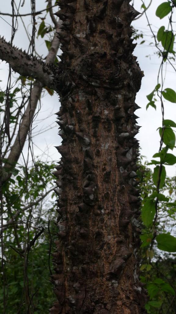 Spike tree