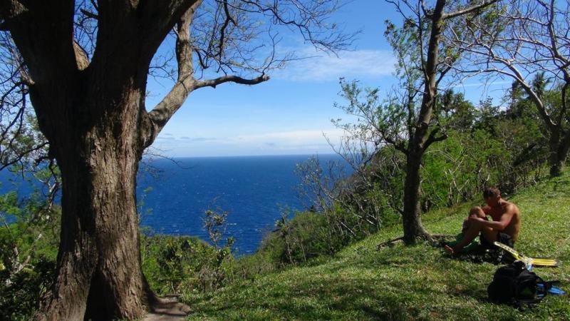 apo island, filippinerne, dykning, skildpadder, palmer, strand, snorkling